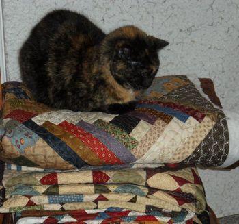 Snuggles teh cat